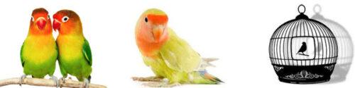Vogelkooien