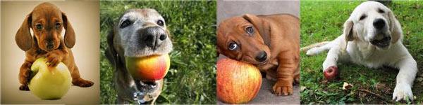 Hondenbrokken TOPmerken