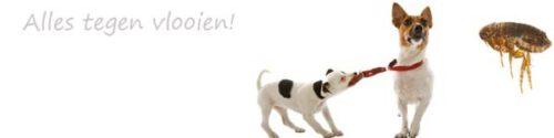 Vlooienbestrijding hond