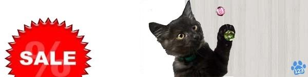 Aanbiedingen katten
