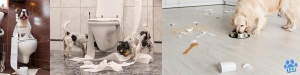 Toiletartikelen hond