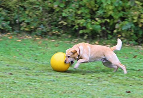 Hondenspeelbal Geel-0