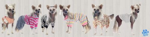 Hondenjasjes