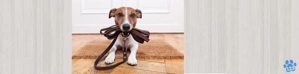 Halsband Hondenriem en Hondentuig