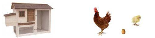 Houten kippenhokken