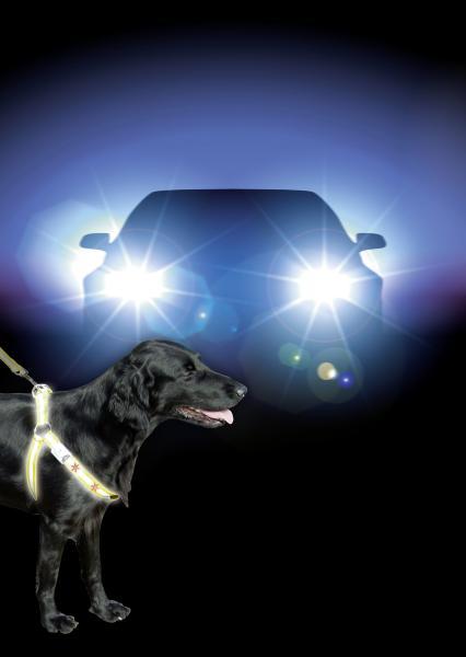 Reflecterend Hondentuig met LED verlichting-0
