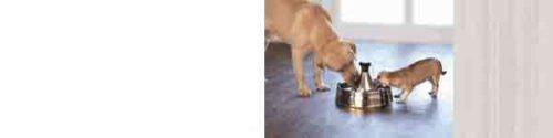 Drinkfontein voor de hond