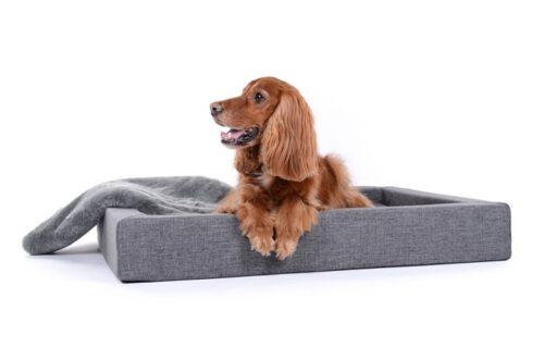 Hondenmand Dream Rectangle Grijs-0